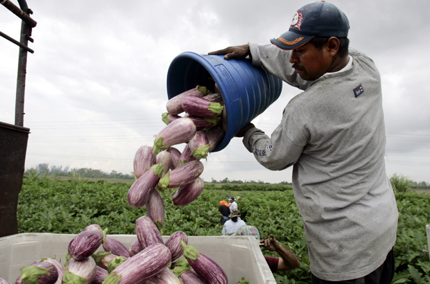 Farmworkers in Florida